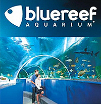 Blue Reef Aquarium - Undersea Family Day Out in Newquay